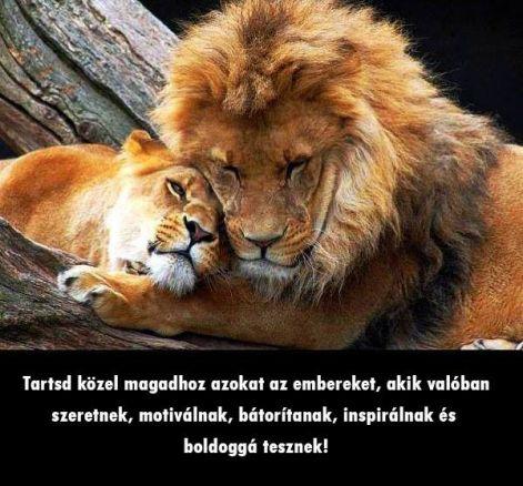 barátság szeretet idézetek Idézetek képekkel